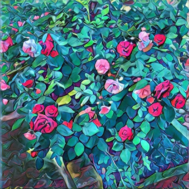 rosenbusch-bild-nach-der-bearbeitung-in-prisma-app